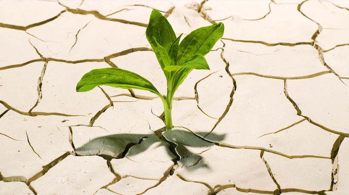 росток из сухой земли